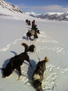 Svalbard (140)